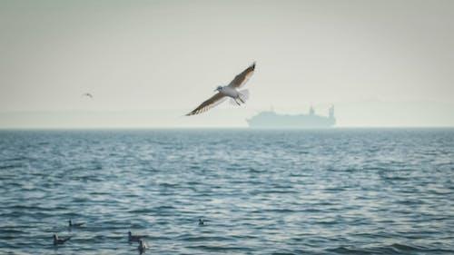 Gratis lagerfoto af azov, hav, have, måge