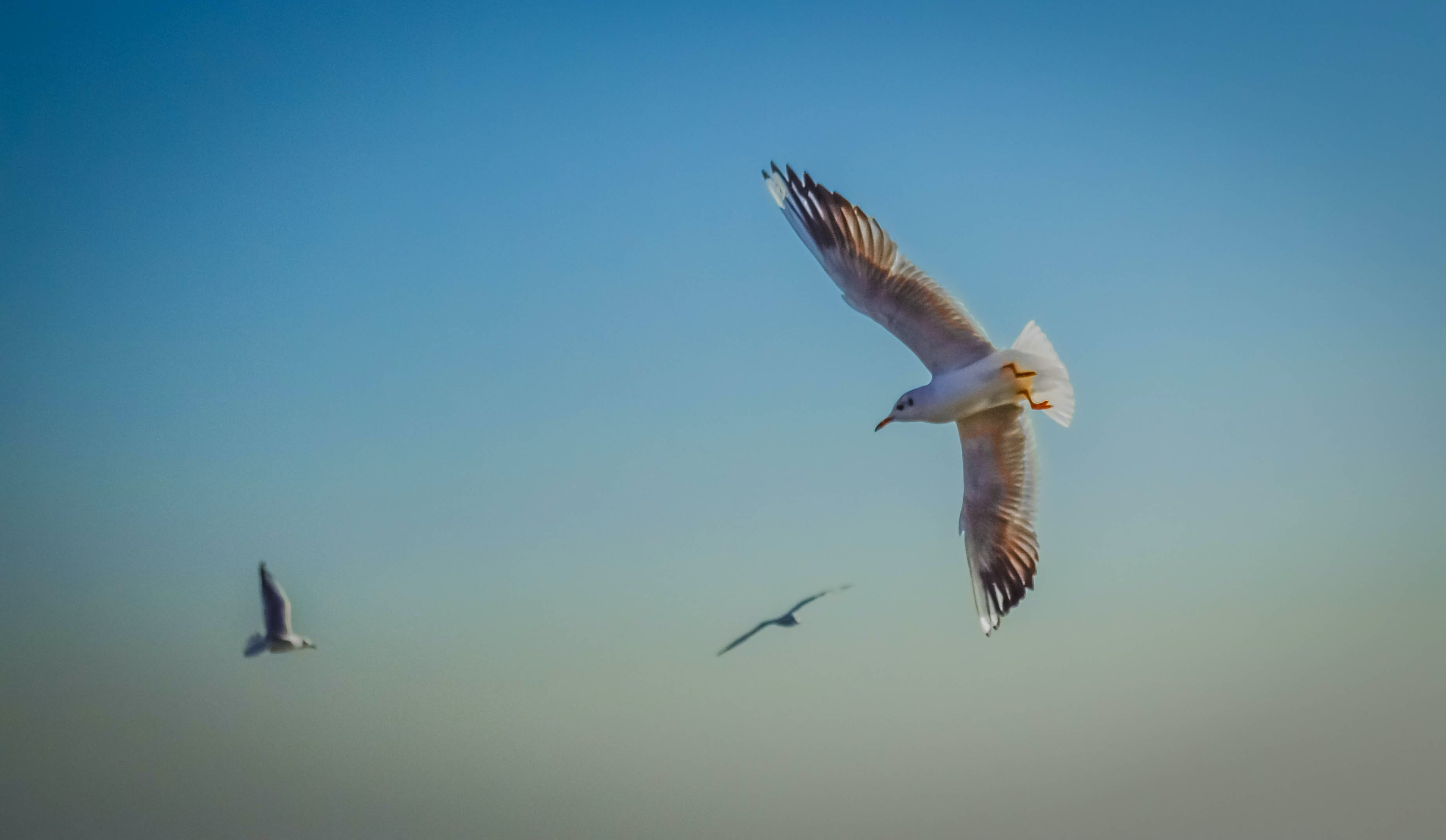 Free stock photo of azov, park, sea, seagull