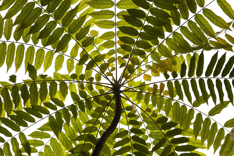Δωρεάν στοκ φωτογραφιών με ανάπτυξη, ανθισμένος, αφαίρεση, δέντρο
