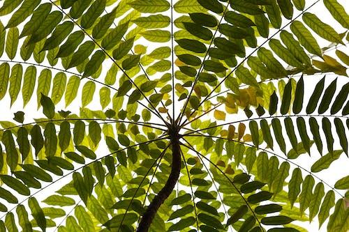 Photos gratuites de abstrait, arbre, brillant, croissance