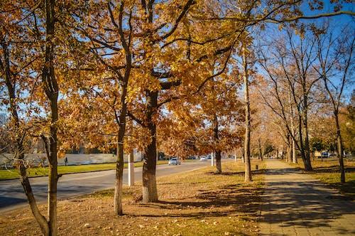 Gratis lagerfoto af gade, have, park
