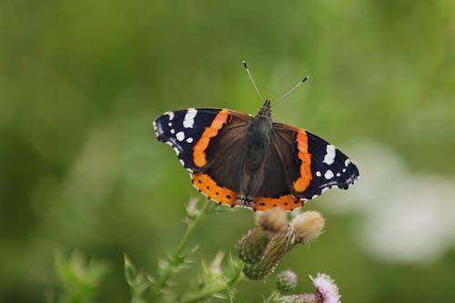 곤충, 곤충학, 나비, 벌레의 무료 스톡 사진