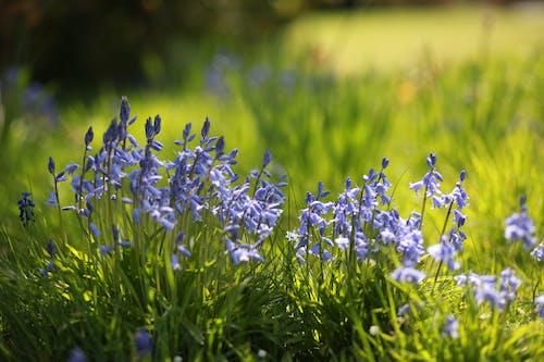 녹색, 봄, 블루 벨, 잔디의 무료 스톡 사진