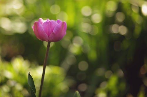 꽃, 녹색, 보케, 여름의 무료 스톡 사진