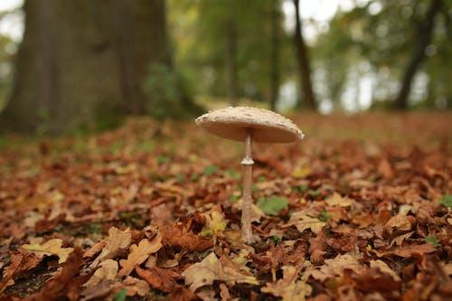 가을, 나뭇잎, 독버섯, 떨어지다의 무료 스톡 사진