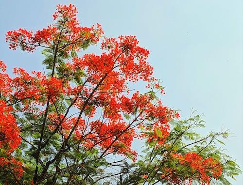 Darmowe zdjęcie z galerii z czerwony, drzewo, flora, fotografia mobilna