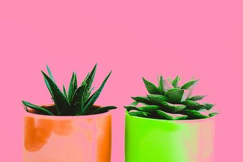 Ingyenes stockfotó cserepek, cserepes növények, dekoráció, gyárak témában