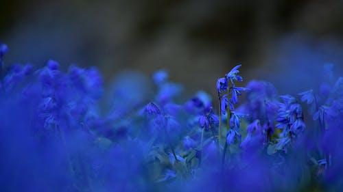Gratis lagerfoto af blå, blomst, blomstermotiv, blomstrende