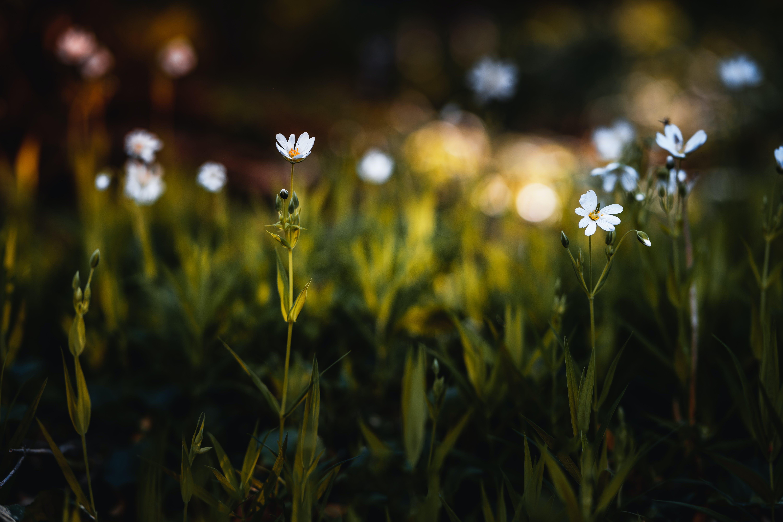 Ingyenes stockfotó boke, fű, homály, kert témában