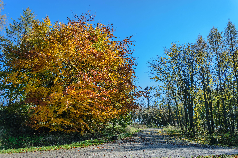 Free stock photo of road, landscape, nature, walking