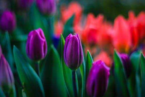 Gratis arkivbilde med åker, årstid, blomst, blomster