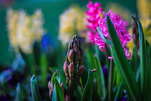 Gratis arkivbilde med klokke, kunstige blomster, sommerfugl på blomst, vakker blomst