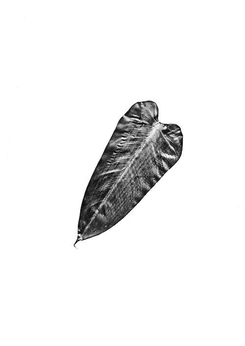 Imagine de stoc gratuită din concentrare, culori, frunză, fundal alb
