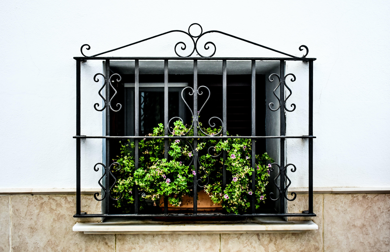 Green-leafed Plant on Window