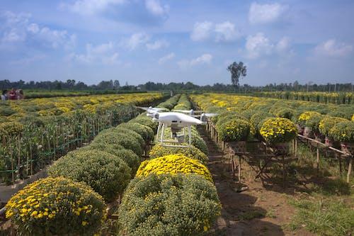 Foto d'estoc gratuïta de a l'aire lliure, agricultura, arbres, càmera de dron