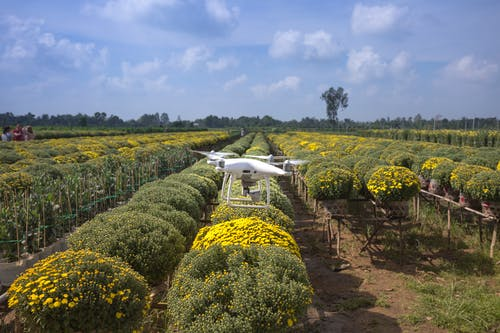 Dji Phantom Drone on Air