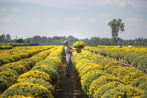 Orang Membawa Keranjang Bunga Kuning