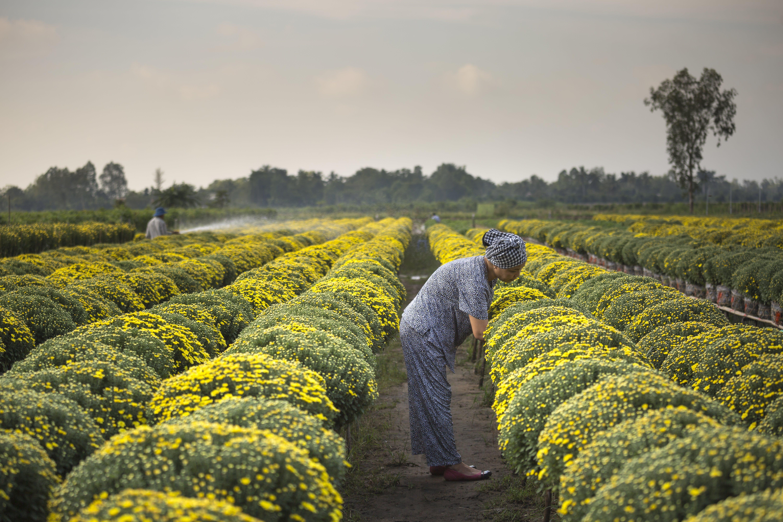 Základová fotografie zdarma na téma barva, denní světlo, farma, flóra
