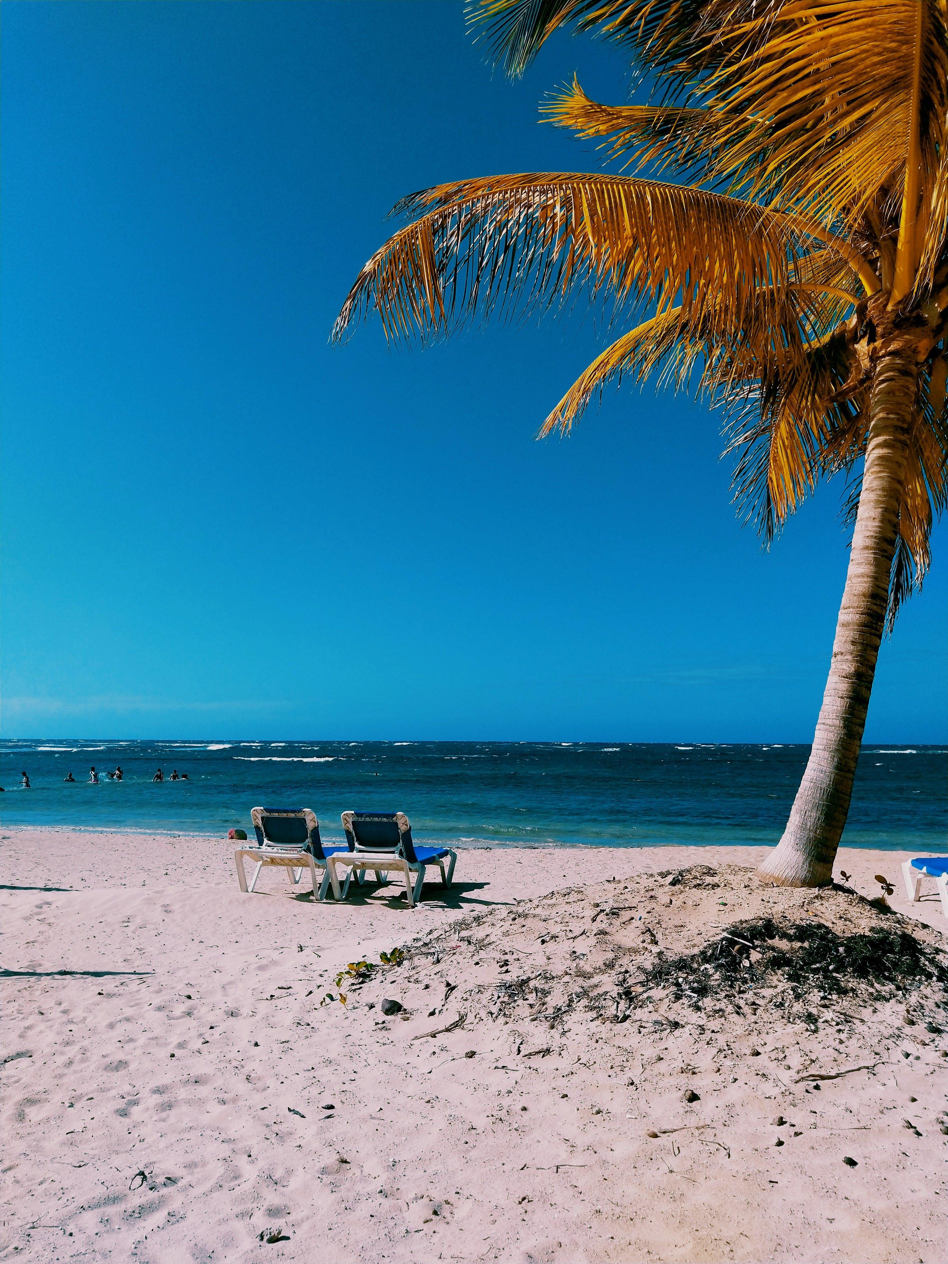 Kostenloses Stock Foto zu ferien, hübsch, idyllisch, kokosnussbaum