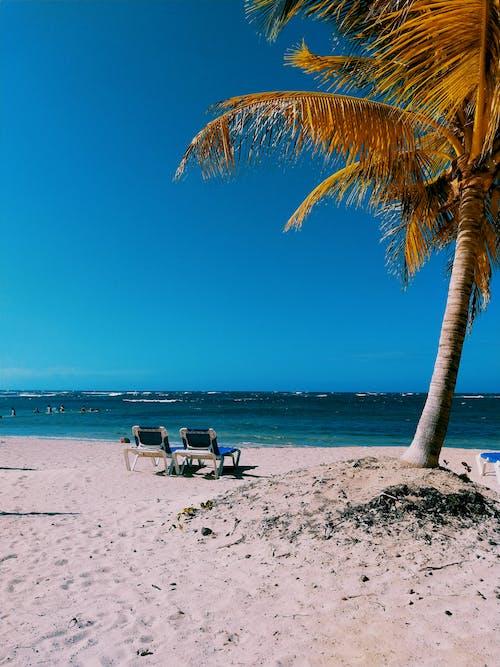 Foto profissional grátis de areia, atraente, beira-mar, coqueiro