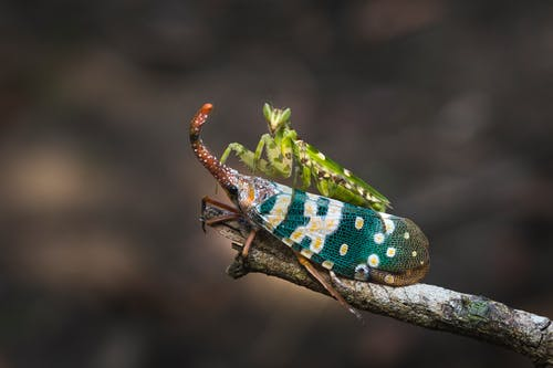 Сетокрылые насекомые