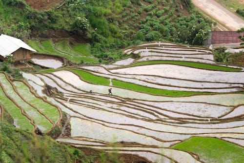 Kostnadsfri bild av åkermark, berg, bondgård, fält