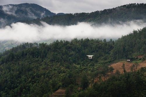 Green Trees Near White Clouded Smoke