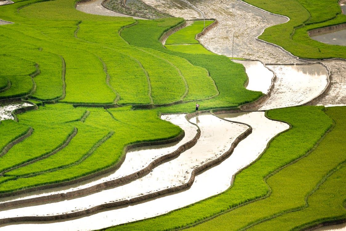 agricultor, agricultura, agua