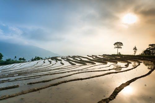 Gratis stockfoto met akkerland, boerderij, boerenbedrijf, bomen