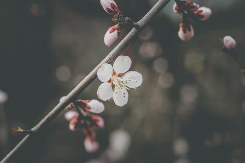 4k duvar kağıdı, alan derinliği, Beyaz çiçek, bitki örtüsü içeren Ücretsiz stok fotoğraf