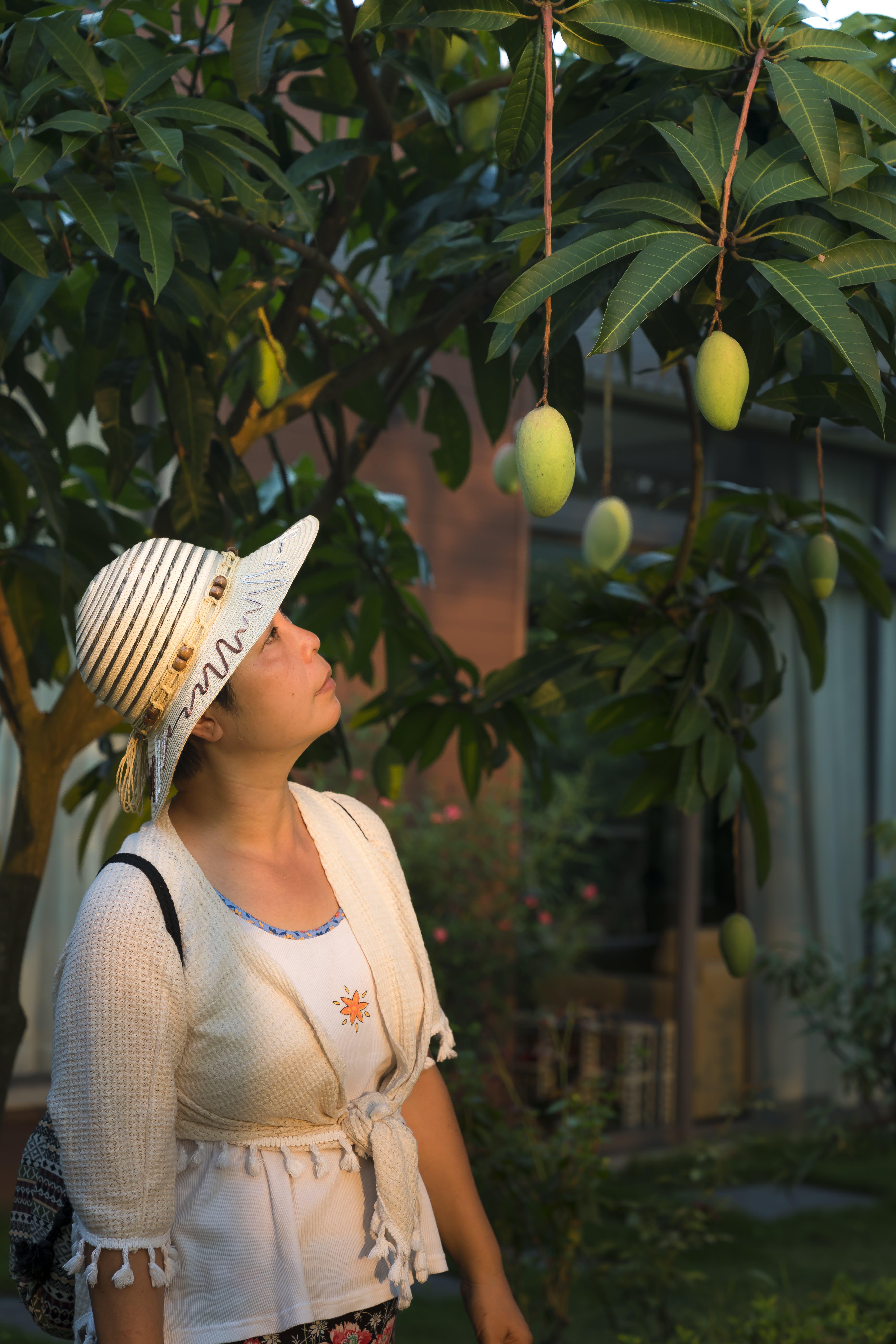 Foto d'estoc gratuïta de a l'aire lliure, arbre, barret, bonic
