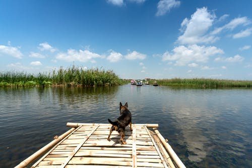 Black Dog on Dock Near Body Types of Water