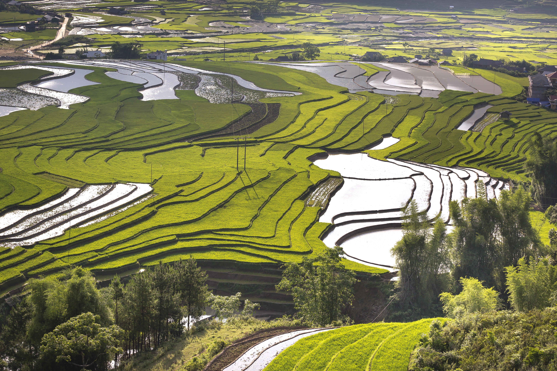 Δωρεάν στοκ φωτογραφιών με αγρόκτημα, ανάπτυξη, γεωργία, γήπεδο