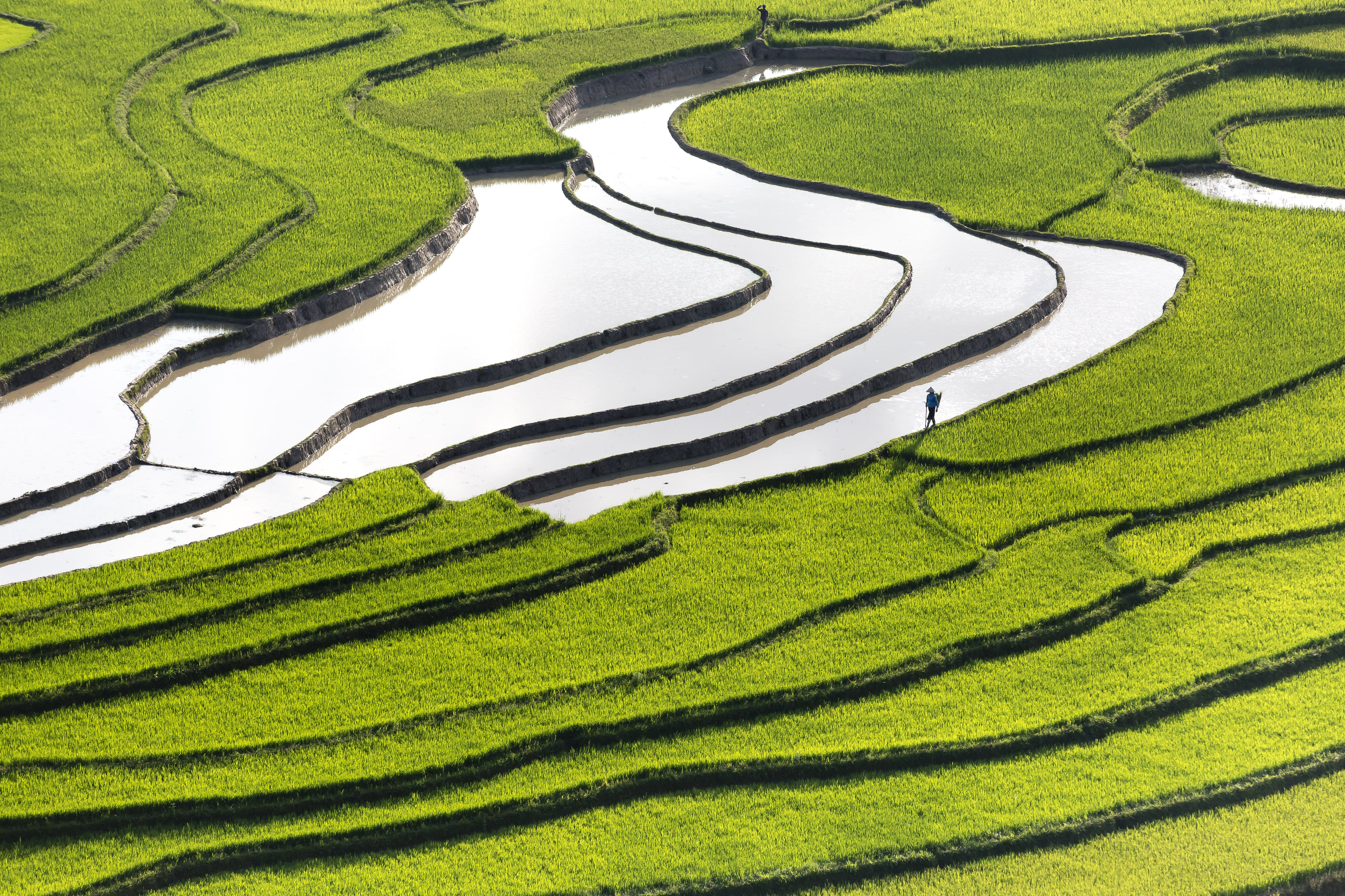 Person Standing in Green Grass Terraces