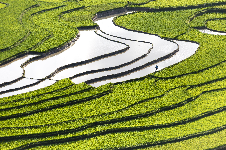 Δωρεάν στοκ φωτογραφιών με αγρόκτημα, αγρότης, ανάπτυξη, άνδρας