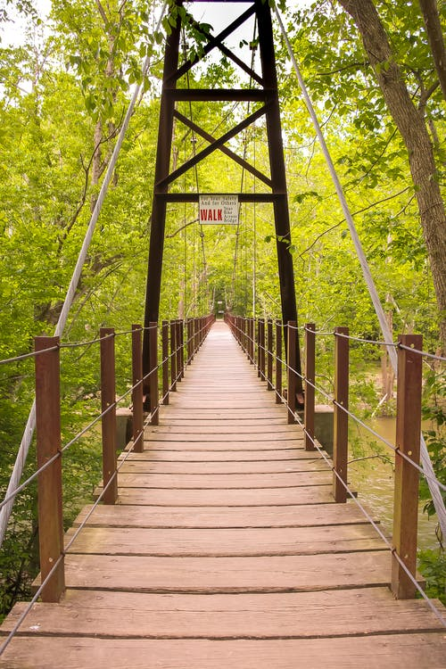 Brown Wooden Foot Bridge Surrounded by Trees