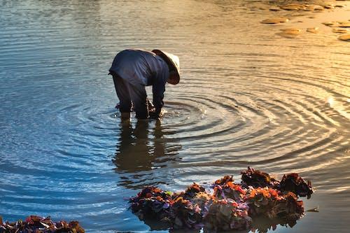 Δωρεάν στοκ φωτογραφιών με αγρότης, άνθρωπος, αντανάκλαση, δουλειά