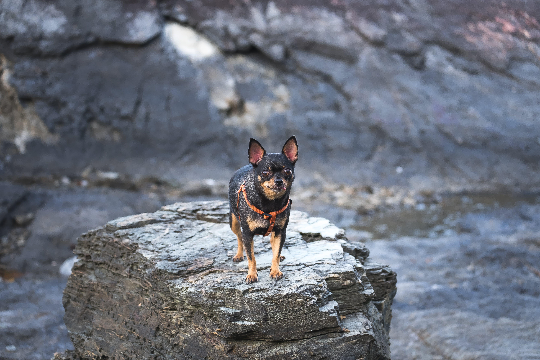 Darmowe zdjęcie z galerii z pies, psi, ssak, uroczy