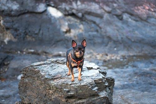 Základová fotografie zdarma na téma domácí mazlíček, pes, psí, roztomilý