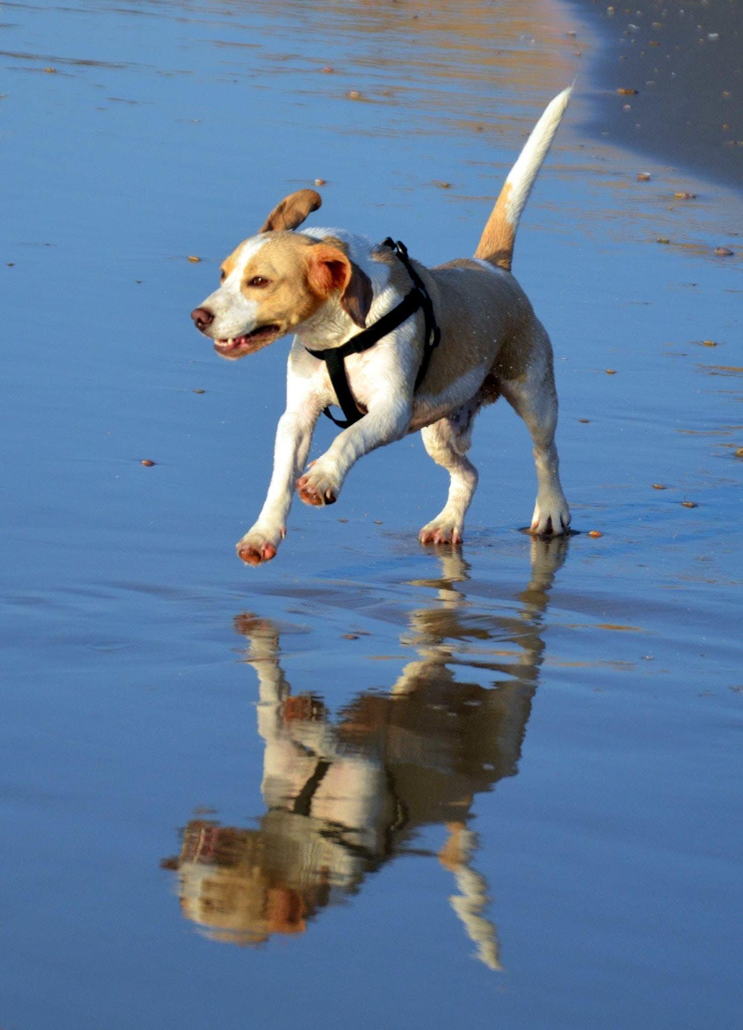 Free stock photo of dog, joy, joyful, reflection