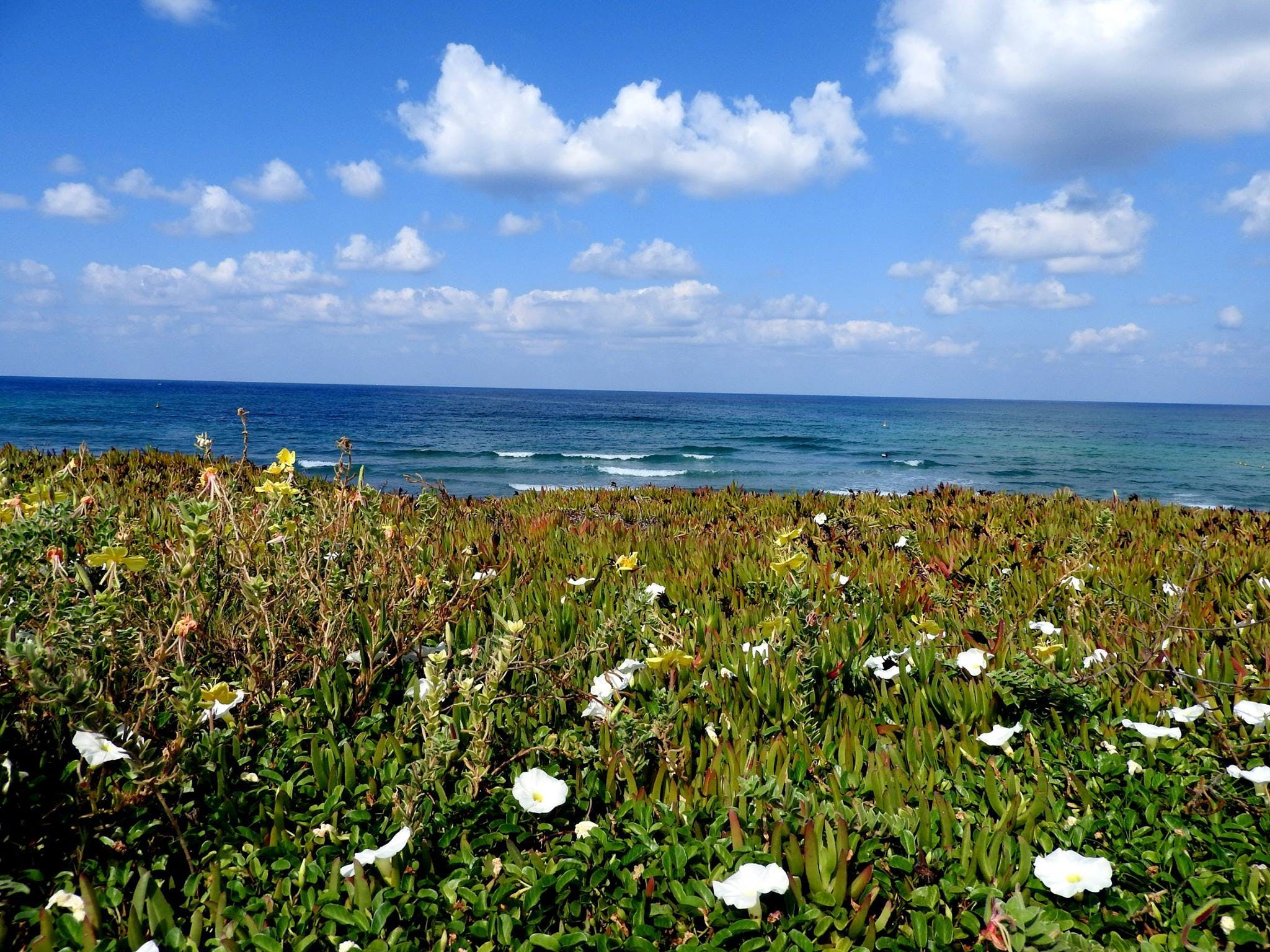 Free stock photo of beach, bed of flowers, cloud, clouds