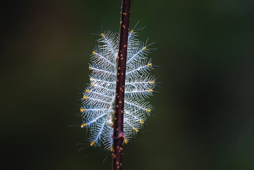 White Caterpillar Close-up Photography