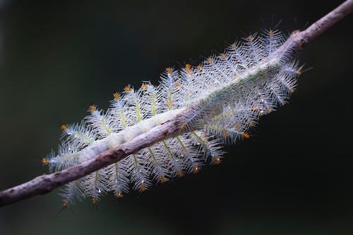 Darmowe zdjęcie z galerii z caterpillar, czarne tło, fotografia makro, fotografia owadów