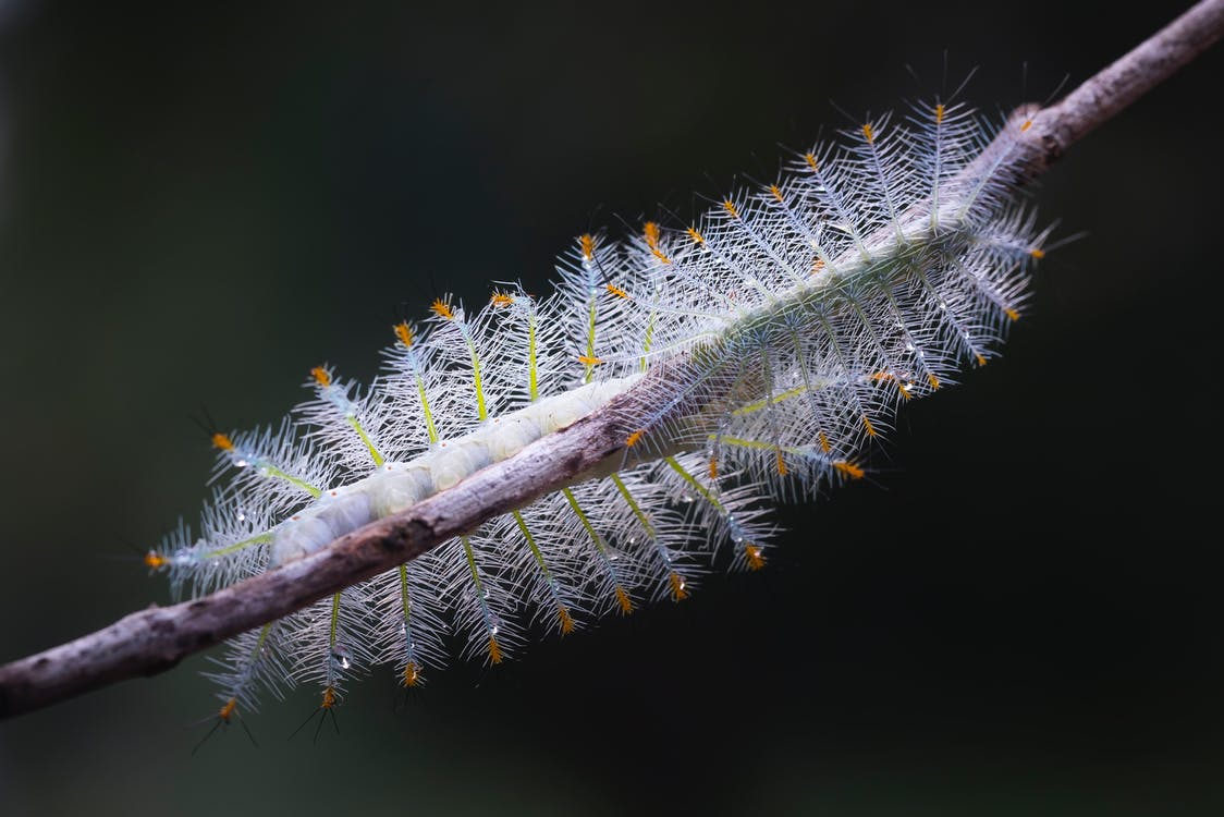 Green Caterpillar on Tree Branch in Selective-focus Photography