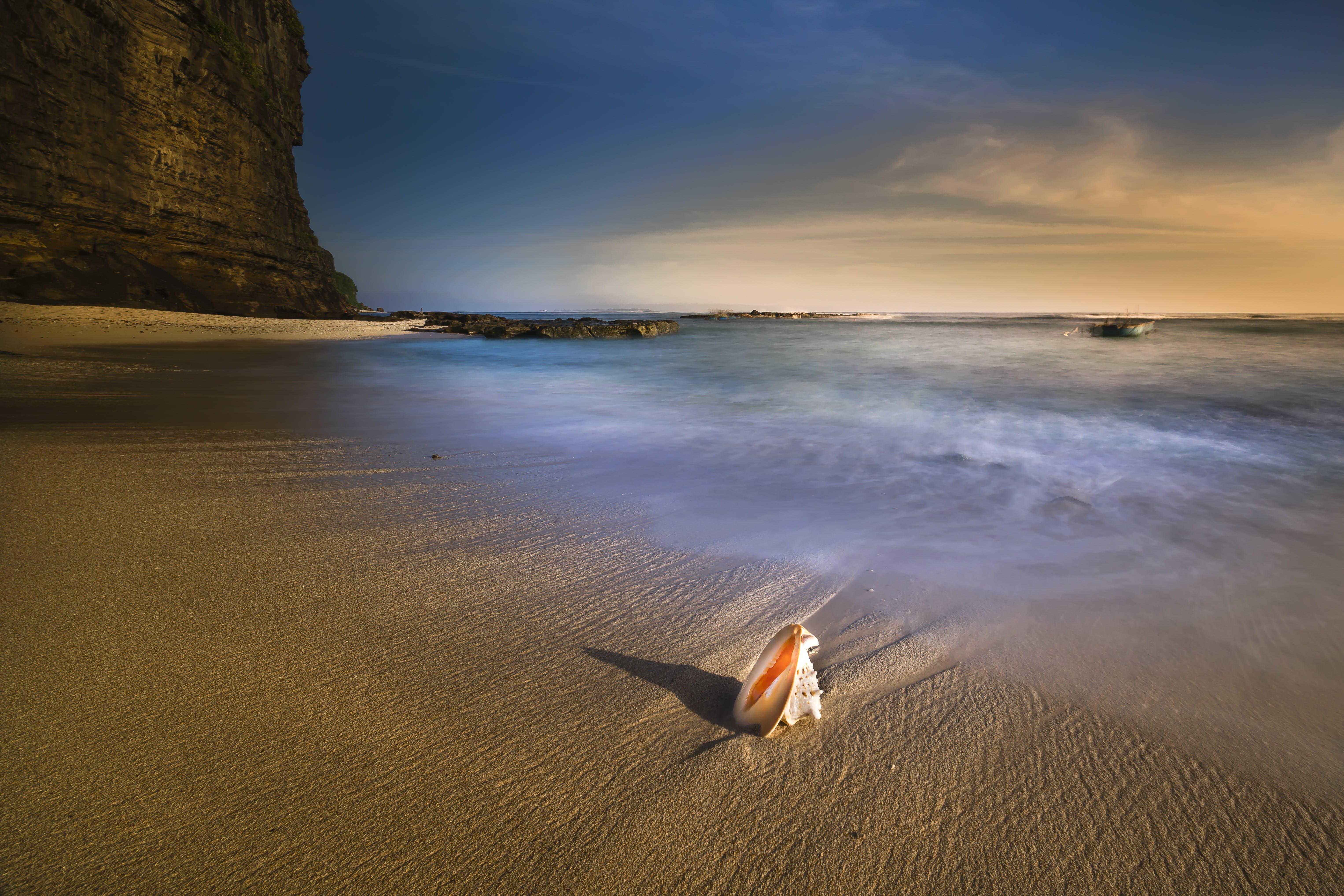 Shell On Shore