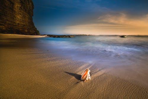 Darmowe zdjęcie z galerii z morze, muszla, ocean, pejzaż morski