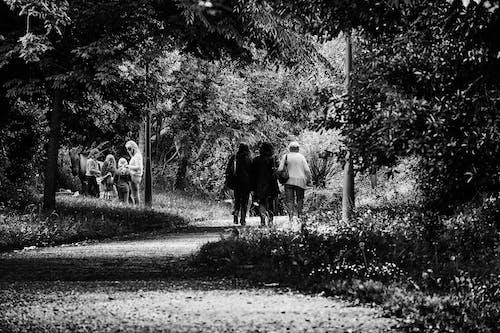 Δωρεάν στοκ φωτογραφιών με Άνθρωποι, ασπρόμαυρο, δέντρα, δρόμος