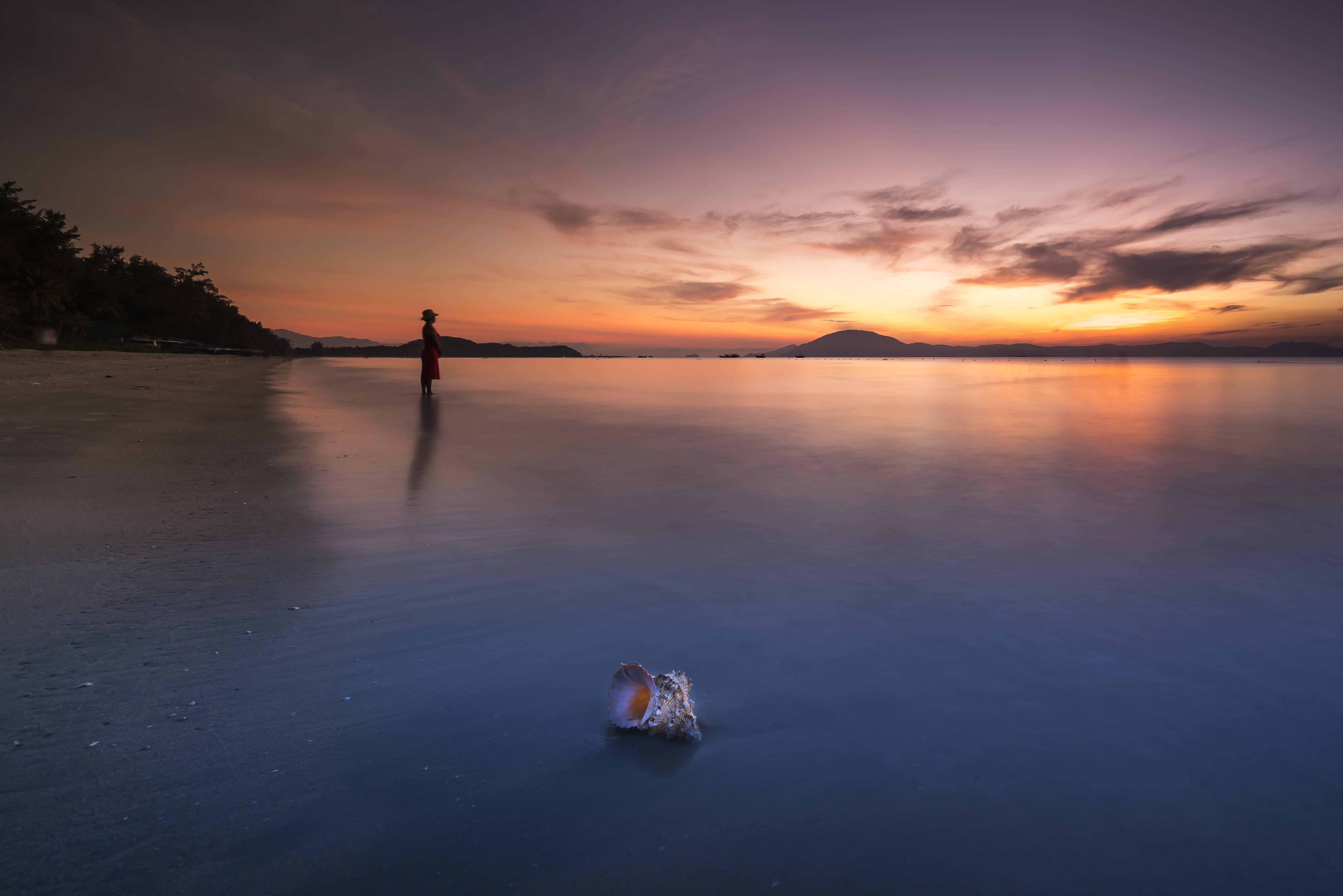 Foto profissional grátis de alvorecer, beira-mar, cair da noite, concha