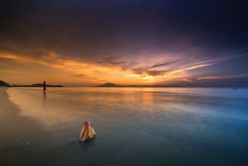 waingani, 人, 剪影, 天空 的 免費圖庫相片
