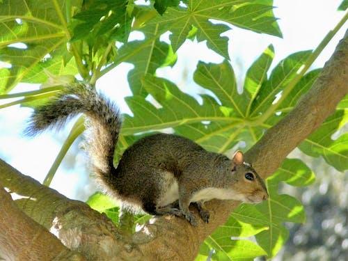 Fotobanka sbezplatnými fotkami na tému príroda, veverička, zvieratá